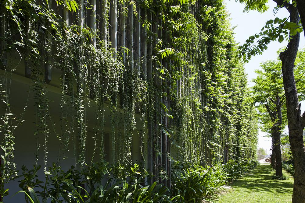 Šta su zapravo zeleni zidovi