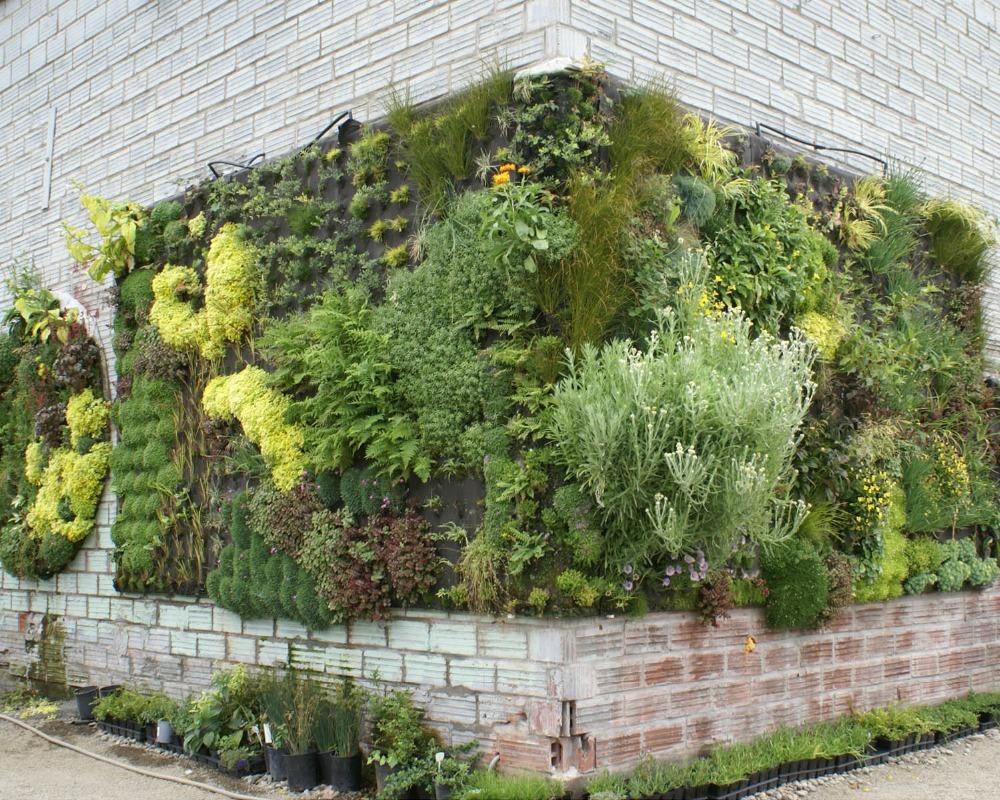 kako-funcionisu-zeleni-zidovi