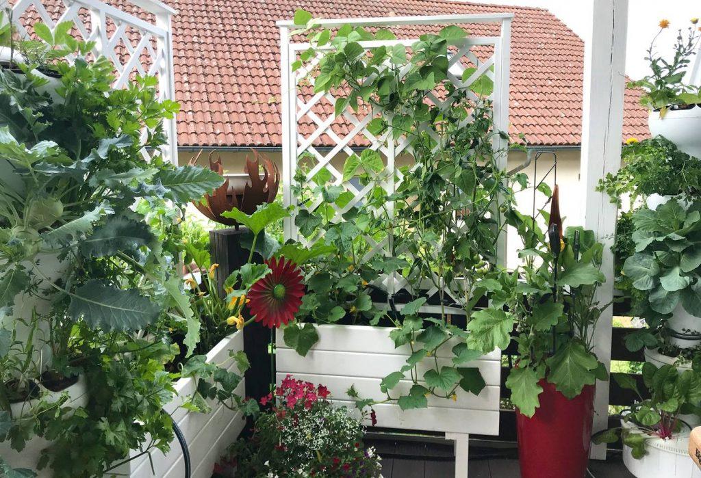 Deset plodonosnih biljaka koje možete gajiti na terasi KRASTAVAC